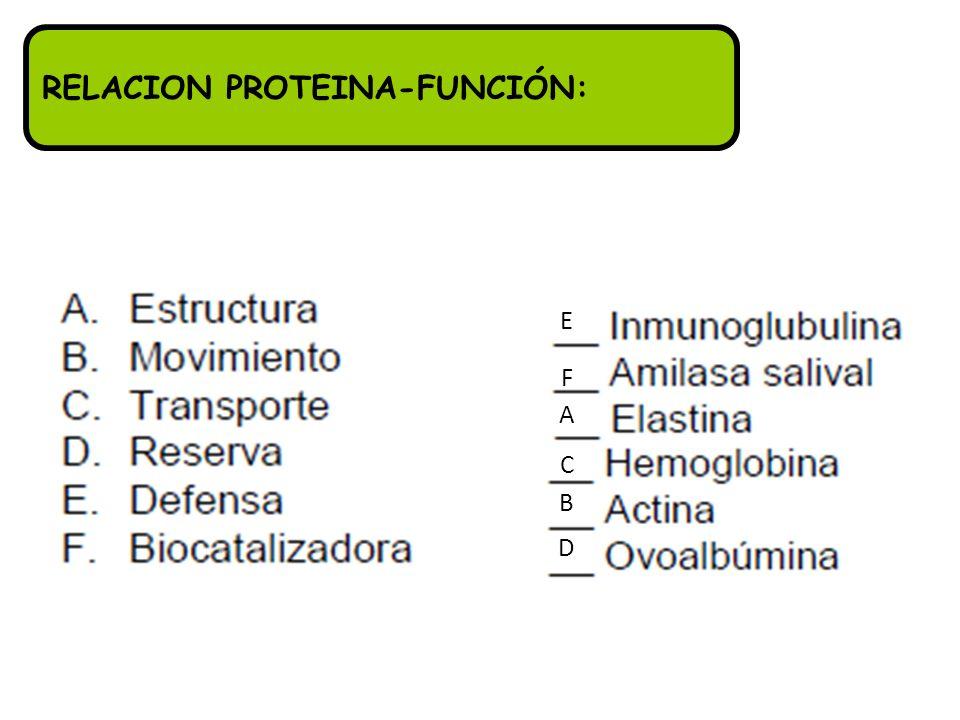 RELACION PROTEINA-FUNCIÓN: B D C A F E