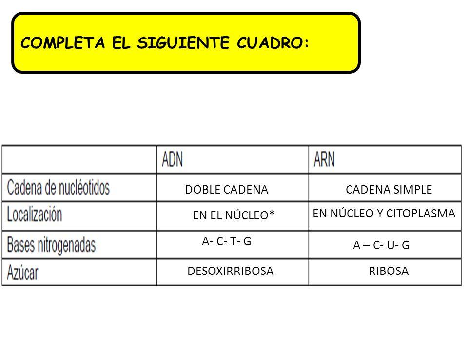 COMPLETA EL SIGUIENTE CUADRO: DOBLE CADENACADENA SIMPLE EN EL NÚCLEO* EN NÚCLEO Y CITOPLASMA A- C- T- G A – C- U- G DESOXIRRIBOSARIBOSA