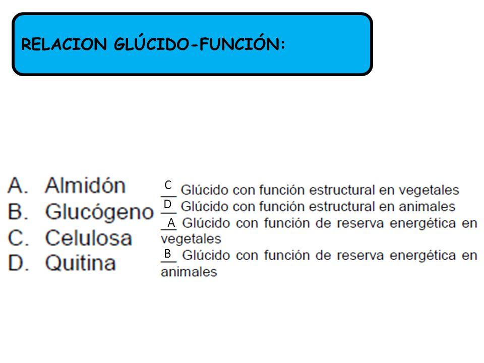 RELACION GLÚCIDO-FUNCIÓN: A B C D