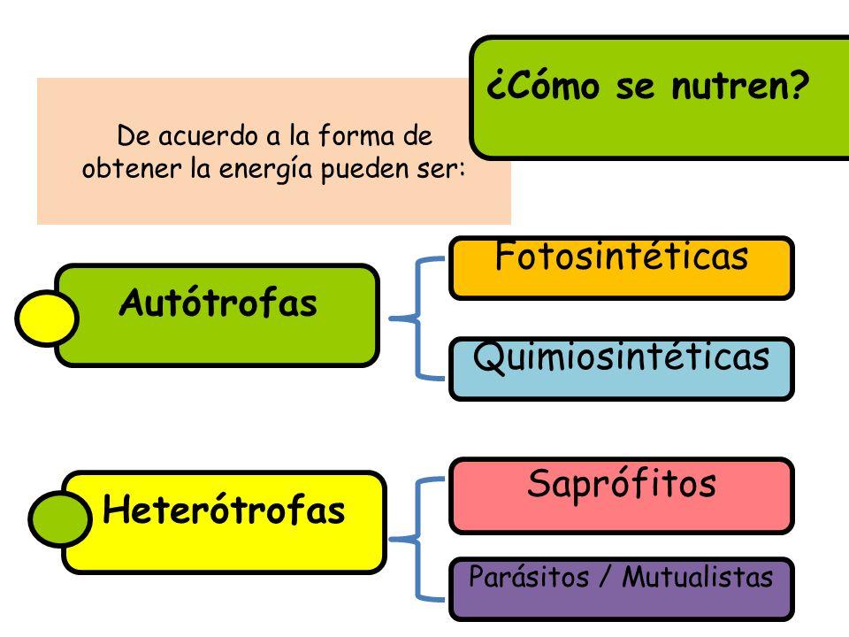 De acuerdo a la forma de obtener la energía pueden ser: ¿Cómo se nutren? Heterótrofas Quimiosintéticas Fotosintéticas Autótrofas Parásitos / Mutualist
