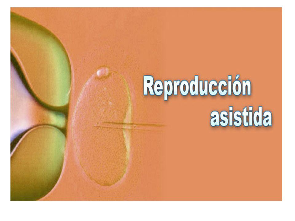 Conceptos básicos de reproducción Las personas nos reproducimos sexualmente.