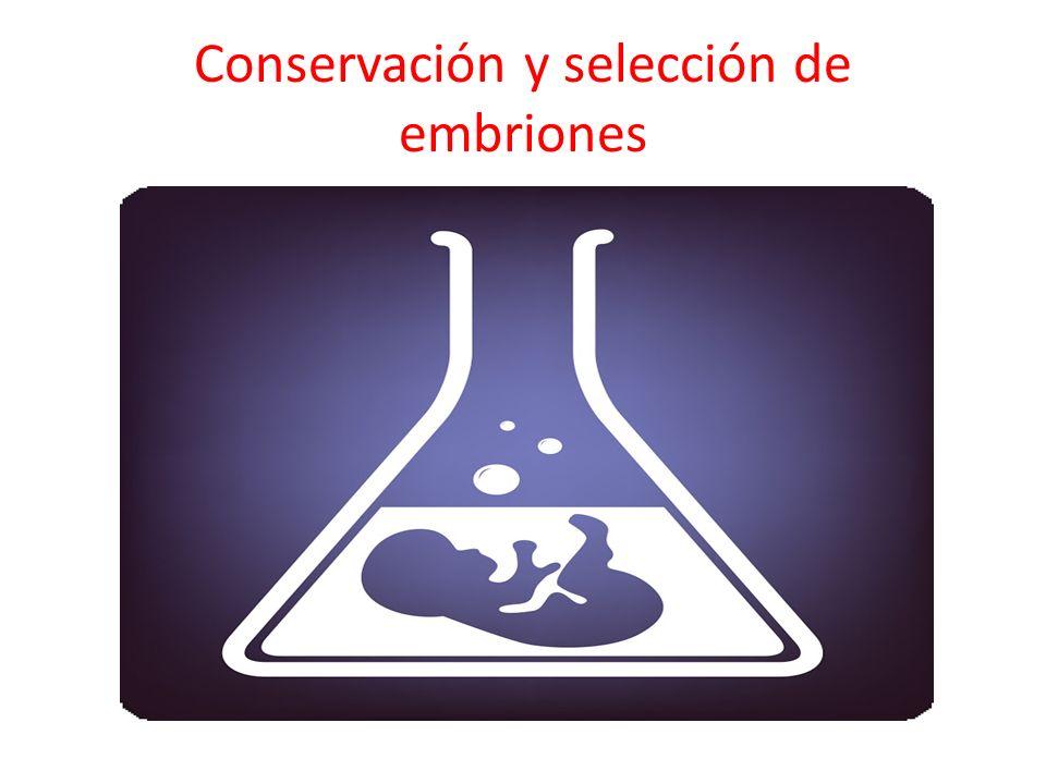 Conservación y selección de embriones