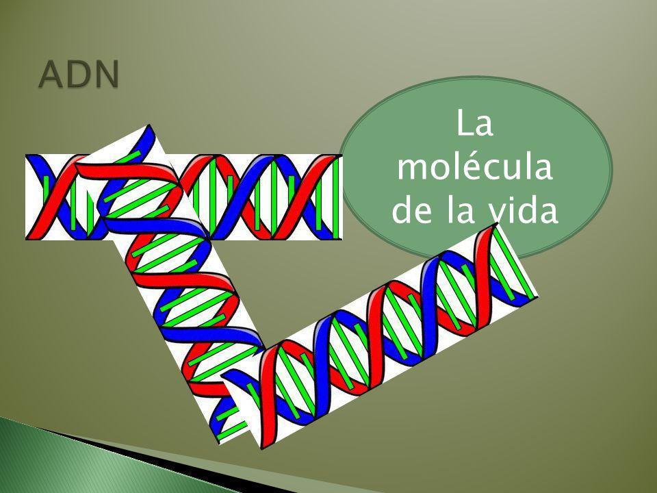 La molécula de la vida