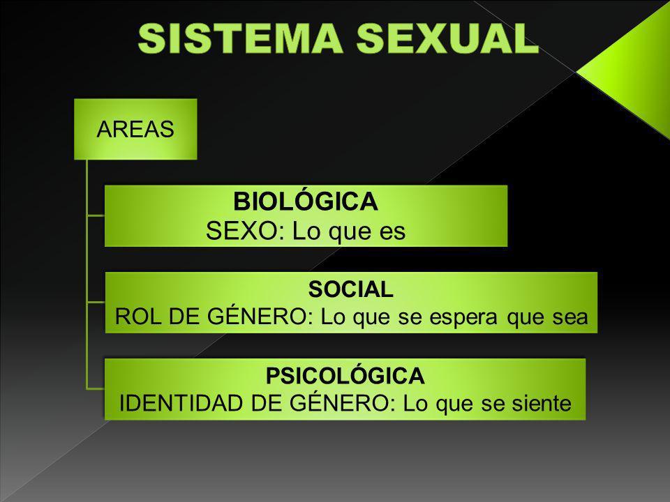 AREAS BIOLÓGICA SEXO: Lo que es SOCIAL ROL DE GÉNERO: Lo que se espera que sea PSICOLÓGICA IDENTIDAD DE GÉNERO: Lo que se siente