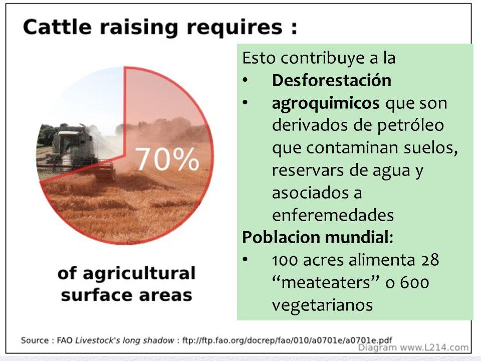 Esto contribuye a la Desforestación agroquimicos que son derivados de petróleo que contaminan suelos, reservars de agua y asociados a enferemedades Poblacion mundial: 100 acres alimenta 28 meateaters o 600 vegetarianos