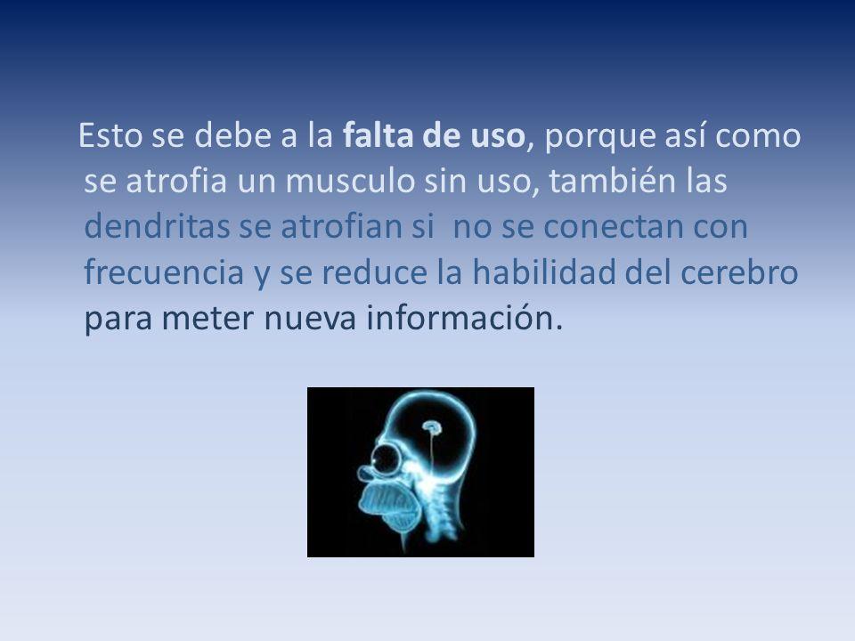 Esto se debe a la falta de uso, porque así como se atrofia un musculo sin uso, también las dendritas se atrofian si no se conectan con frecuencia y se reduce la habilidad del cerebro para meter nueva información.