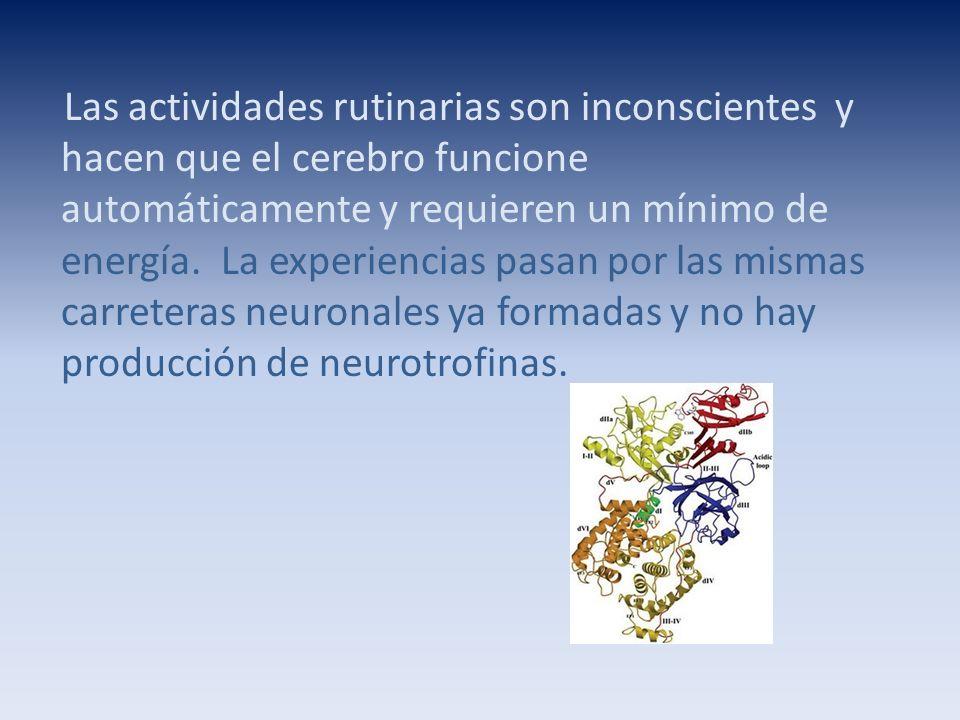 Las actividades rutinarias son inconscientes y hacen que el cerebro funcione automáticamente y requieren un mínimo de energía.