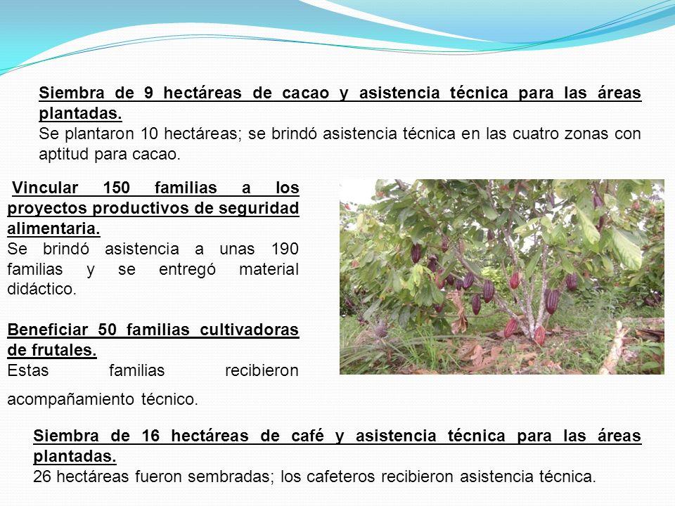 Siembra de 9 hectáreas de cacao y asistencia técnica para las áreas plantadas. Se plantaron 10 hectáreas; se brindó asistencia técnica en las cuatro z