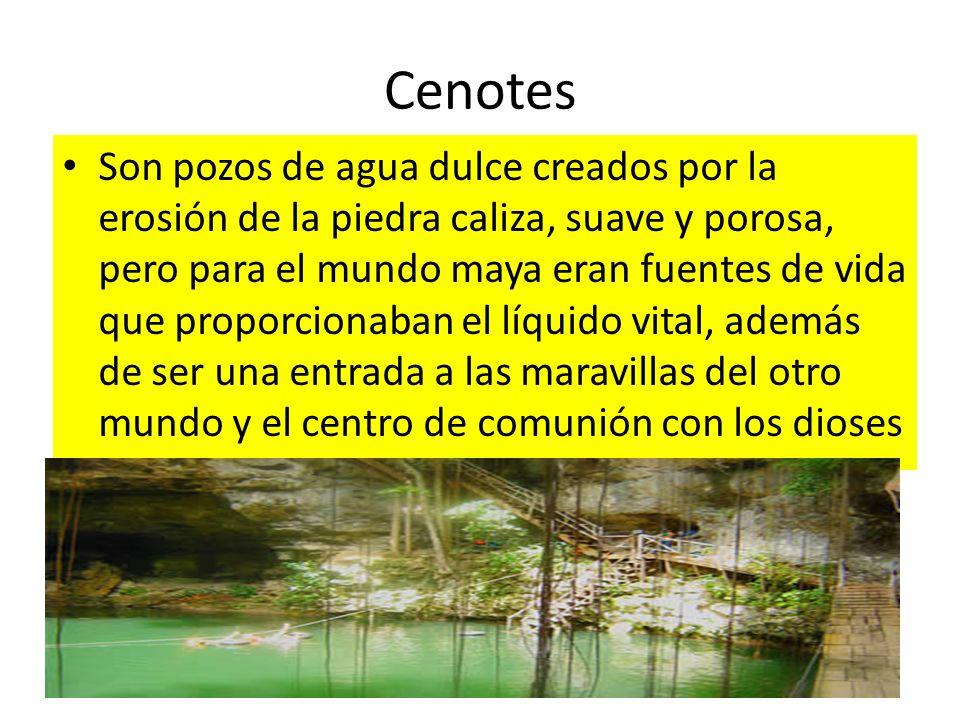 Cenotes Son pozos de agua dulce creados por la erosión de la piedra caliza, suave y porosa, pero para el mundo maya eran fuentes de vida que proporcio