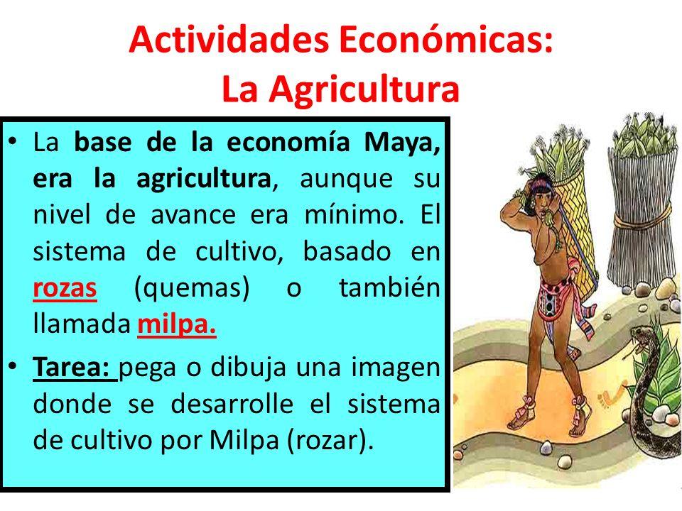 Actividades Económicas: La Agricultura La base de la economía Maya, era la agricultura, aunque su nivel de avance era mínimo. El sistema de cultivo, b