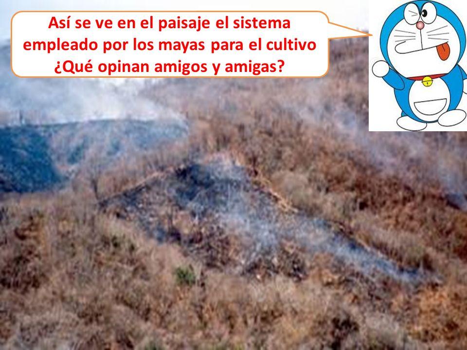 Así se ve en el paisaje el sistema empleado por los mayas para el cultivo ¿Qué opinan amigos y amigas?