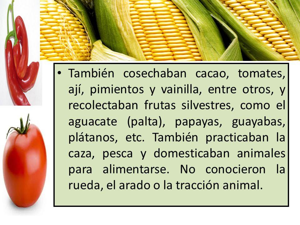 También cosechaban cacao, tomates, ají, pimientos y vainilla, entre otros, y recolectaban frutas silvestres, como el aguacate (palta), papayas, guayab
