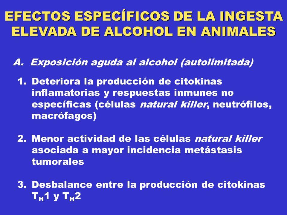 EFECTOS ESPECÍFICOS DE LA INGESTA ELEVADA DE ALCOHOL EN ANIMALES 1.Deteriora la producción de citokinas inflamatorias y respuestas inmunes no específicas (células natural killer, neutrófilos, macrófagos) 2.Menor actividad de las células natural killer asociada a mayor incidencia metástasis tumorales 3.Desbalance entre la producción de citokinas T H 1 y T H 2 A.