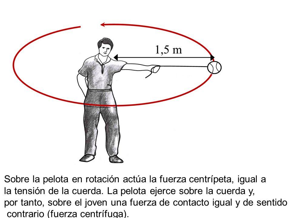 Sobre la pelota en rotación actúa la fuerza centrípeta, igual a la tensión de la cuerda. La pelota ejerce sobre la cuerda y, por tanto, sobre el joven