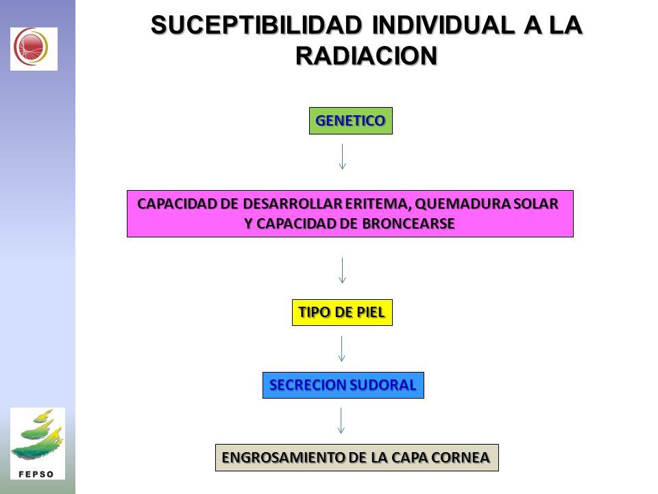SUCEPTIBILIDAD INDIVIDUAL A LA RADIACION GENETICO CAPACIDAD DE DESARROLLAR ERITEMA, QUEMADURA SOLAR Y CAPACIDAD DE BRONCEARSE TIPO DE PIEL SECRECION SUDORAL ENGROSAMIENTO DE LA CAPA CORNEA