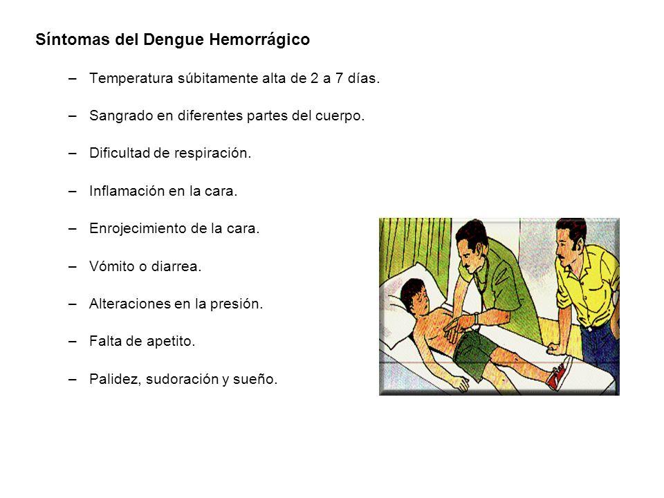 Síntomas del Dengue Hemorrágico –Temperatura súbitamente alta de 2 a 7 días. –Sangrado en diferentes partes del cuerpo. –Dificultad de respiración. –I