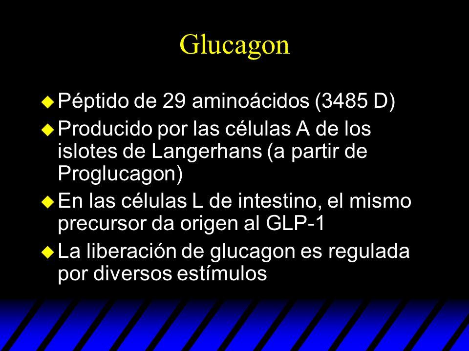 Sustancias que influyen sobre la secreción de glucagon EstimulantesInhibidores NUTRIENTESHipoglucemia Aminoácidos Hiperglucemia Acidos grasos HORMONAS Y PEPTIDOS GIP, CCK, gastrina, GH, adrenalina, opioides Insulina Somatostatina GLP-1 Secretina NEUROTRANS MISORES Ach, NA, VIP, Neurotensina