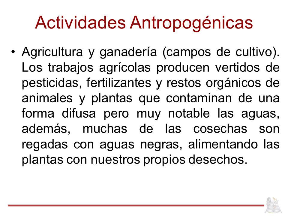 Actividades Antropogénicas Agricultura y ganadería (campos de cultivo). Los trabajos agrícolas producen vertidos de pesticidas, fertilizantes y restos