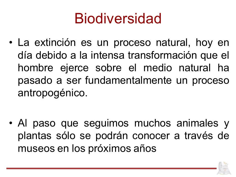 Biodiversidad La extinción es un proceso natural, hoy en día debido a la intensa transformación que el hombre ejerce sobre el medio natural ha pasado