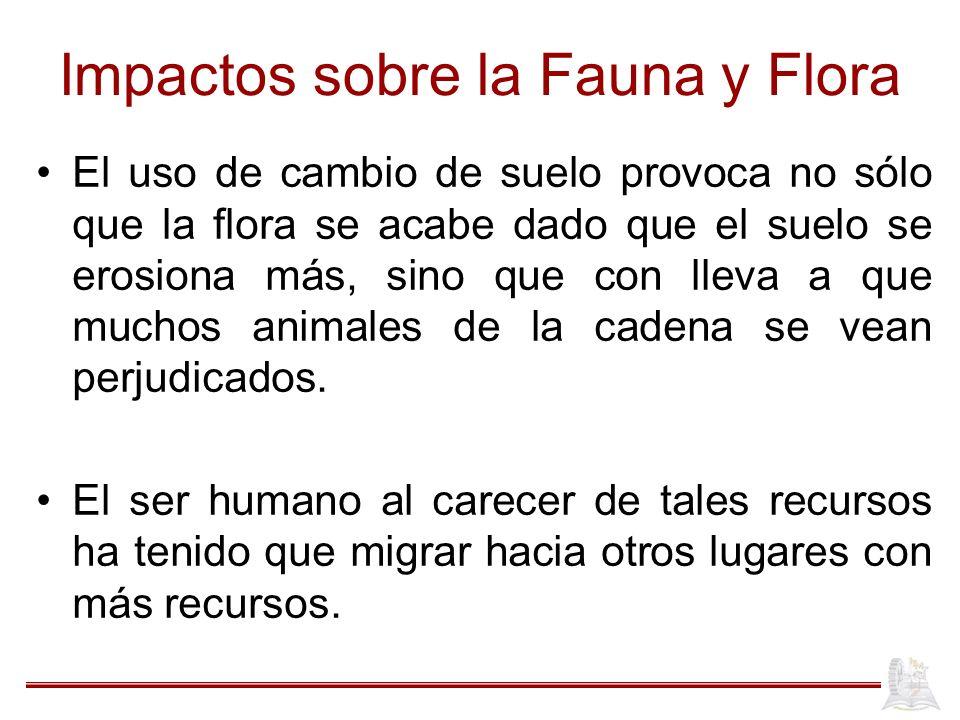 Impactos sobre la Fauna y Flora El uso de cambio de suelo provoca no sólo que la flora se acabe dado que el suelo se erosiona más, sino que con lleva