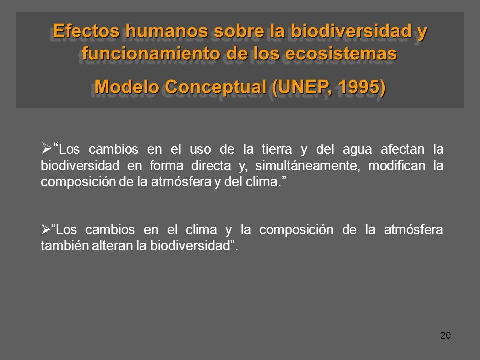 20 Efectos humanos sobre la biodiversidad y funcionamiento de los ecosistemas Modelo Conceptual (UNEP, 1995) Efectos humanos sobre la biodiversidad y