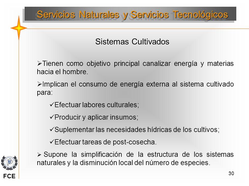 30 Sistemas Cultivados Tienen como objetivo principal canalizar energía y materias hacia el hombre. Implican el consumo de energía externa al sistema