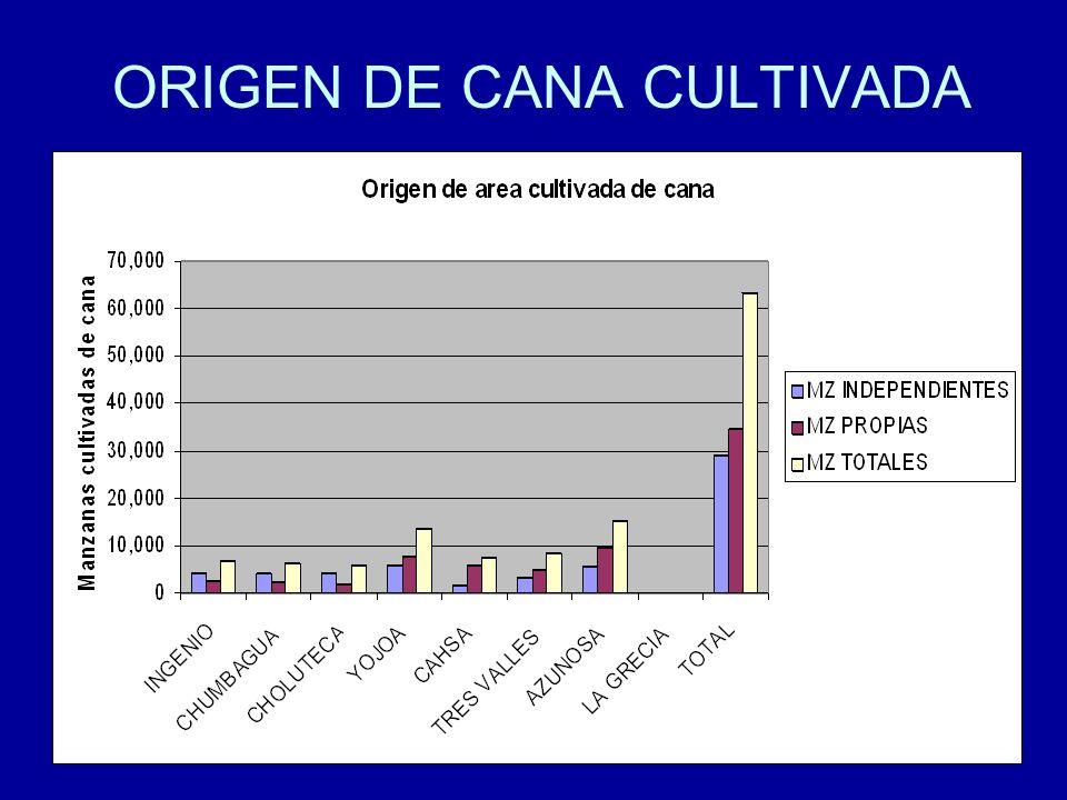 23 ORIGEN DE CANA CULTIVADA