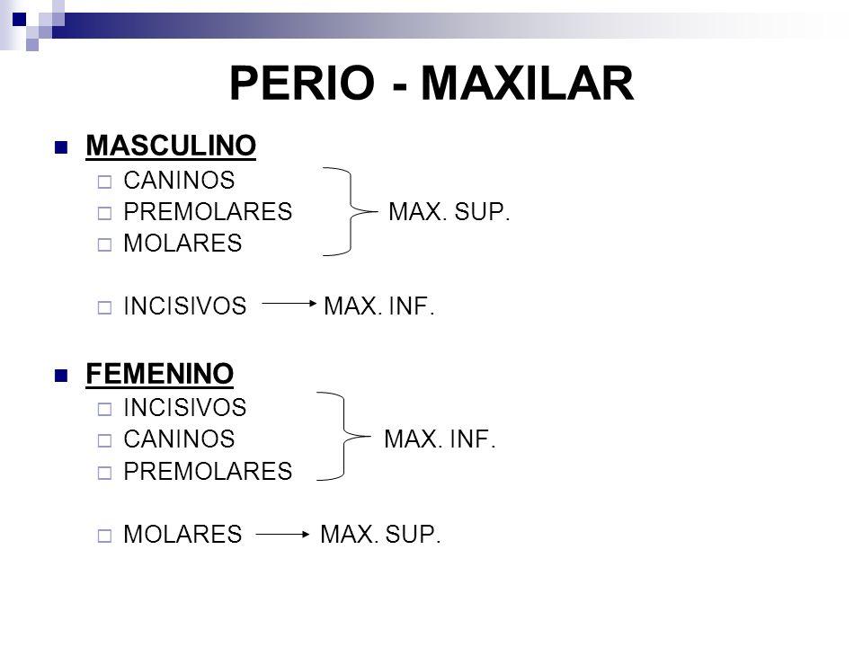 PERIO - MAXILAR MASCULINO CANINOS PREMOLARES MAX. SUP.
