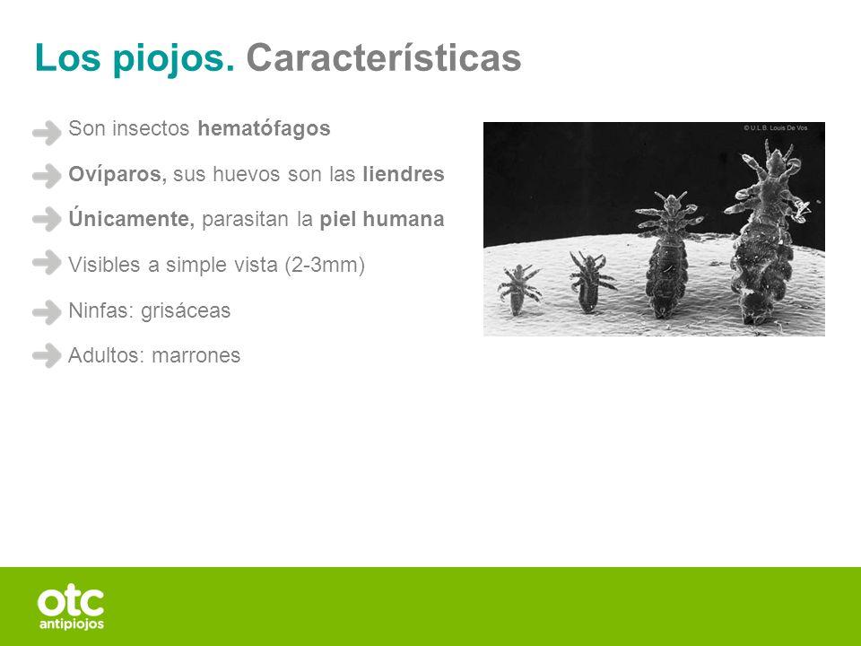 Los piojos. Características Son insectos hematófagos Ovíparos, sus huevos son las liendres Únicamente, parasitan la piel humana Visibles a simple vist