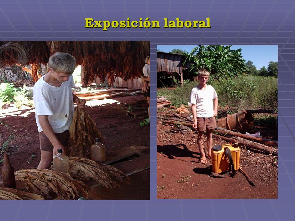 ORGANIZACIÓN EJECUTORA: Asociación Argentina de Médicos por el Medio Ambiente – AAMMA www.aamma.org ORGANIZACIÓN EJECUTORA: Asociación Argentina de Médicos por el Medio Ambiente – AAMMA www.aamma.orgwww.aamma.org ORGANIZACIONES PATROCINADORAS: ORGANIZACIONES PATROCINADORAS: ORGANIZACIÓN PANAMERICANA DE LA SALUD (OPS) ORGANIZACIÓN PANAMERICANA DE LA SALUD (OPS) SECRETARIA DE MEDIO AMBIENTE Y DESARROLLO SUSTENTABLE DE LA NACION SECRETARIA DE MEDIO AMBIENTE Y DESARROLLO SUSTENTABLE DE LA NACION