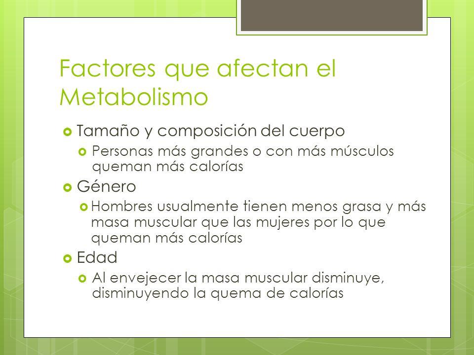 Factores que afectan el Metabolismo Tamaño y composición del cuerpo Personas más grandes o con más músculos queman más calorías Género Hombres usualme