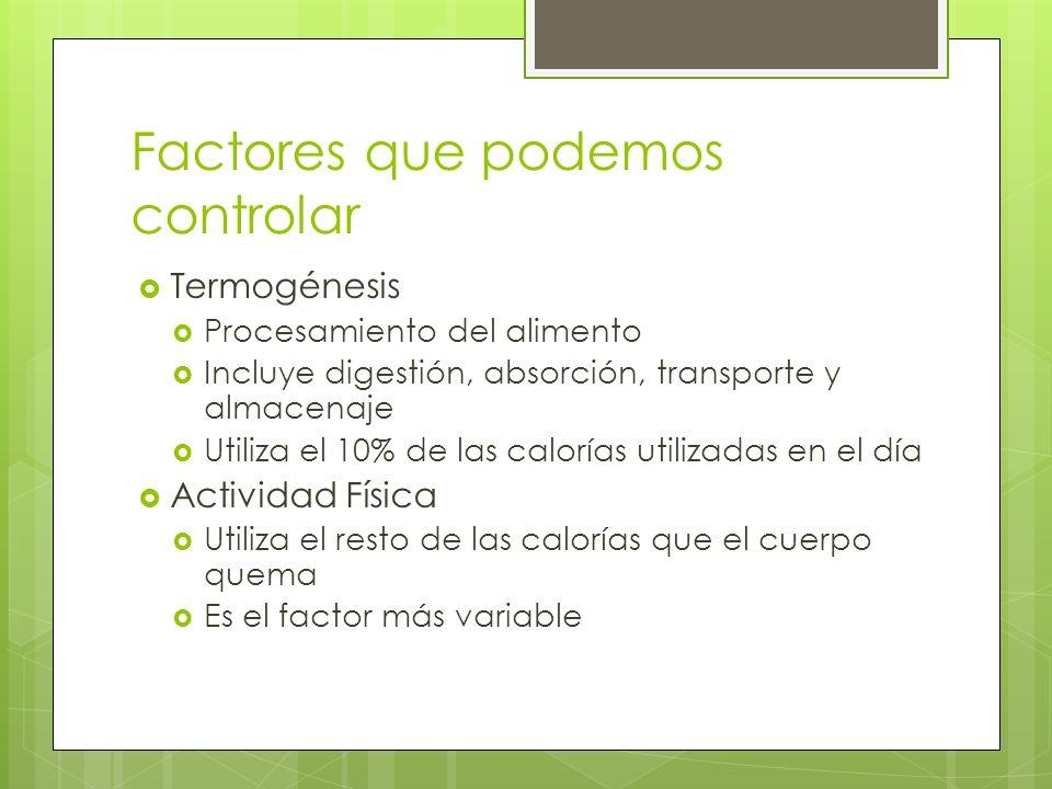 Factores que podemos controlar Termogénesis Procesamiento del alimento Incluye digestión, absorción, transporte y almacenaje Utiliza el 10% de las cal