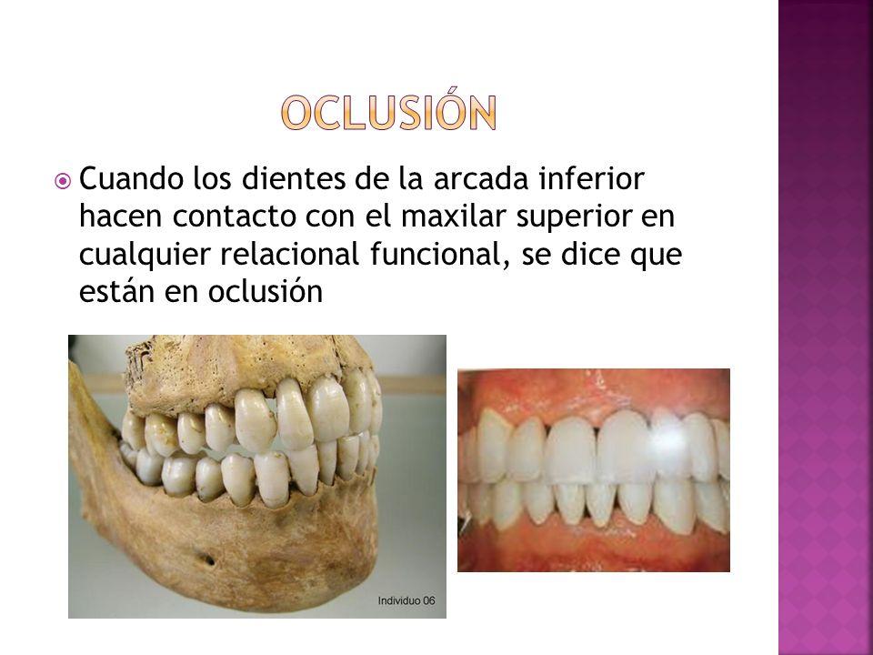 Cuando los dientes de la arcada inferior hacen contacto con el maxilar superior en cualquier relacional funcional, se dice que están en oclusión