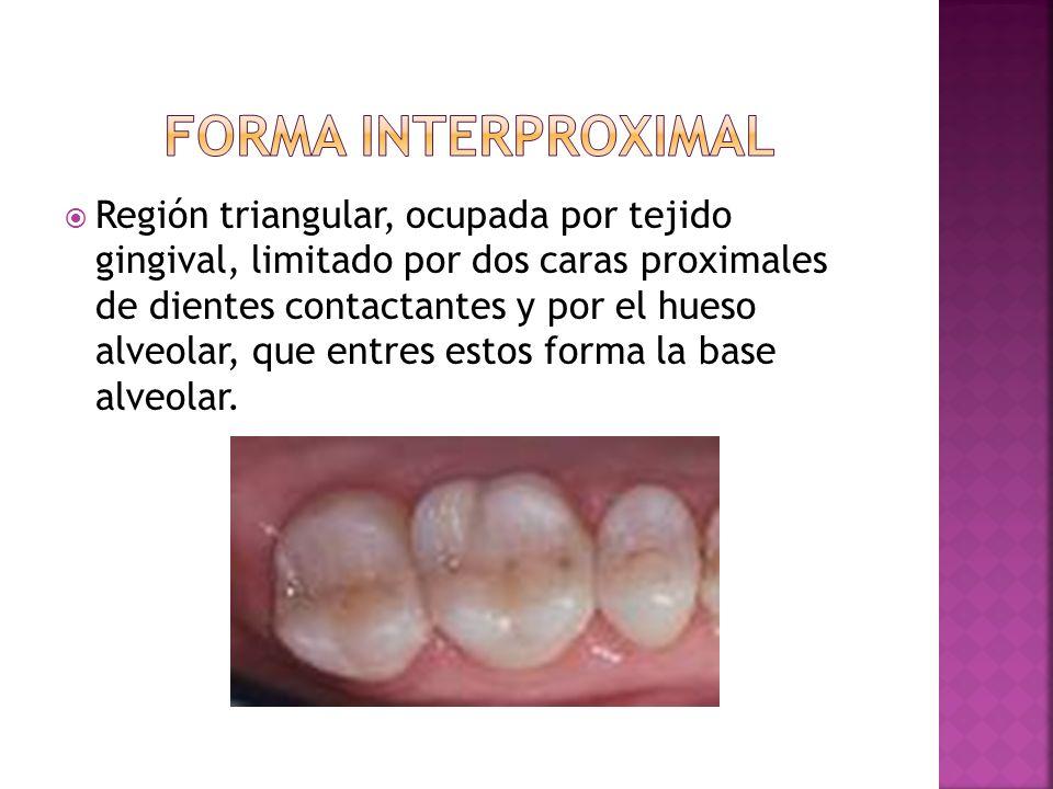 Región triangular, ocupada por tejido gingival, limitado por dos caras proximales de dientes contactantes y por el hueso alveolar, que entres estos fo