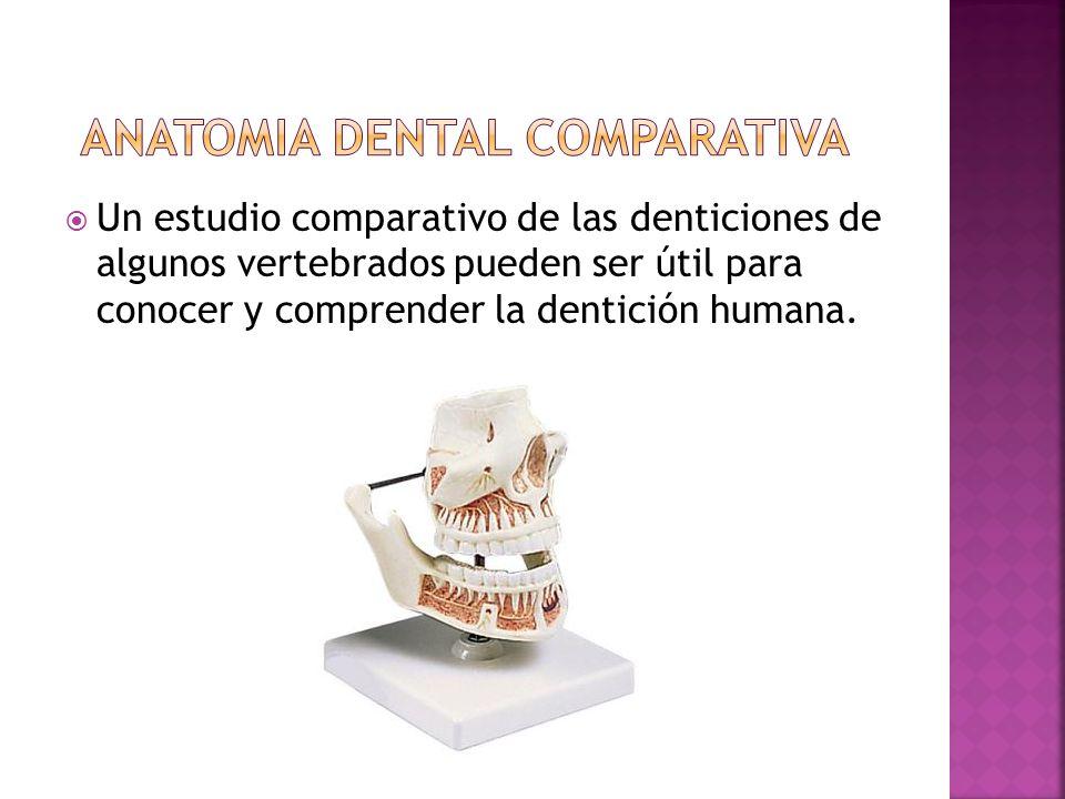 Un estudio comparativo de las denticiones de algunos vertebrados pueden ser útil para conocer y comprender la dentición humana.