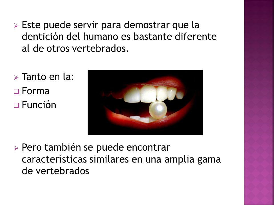 Este puede servir para demostrar que la dentición del humano es bastante diferente al de otros vertebrados. Tanto en la: Forma Función Pero también se