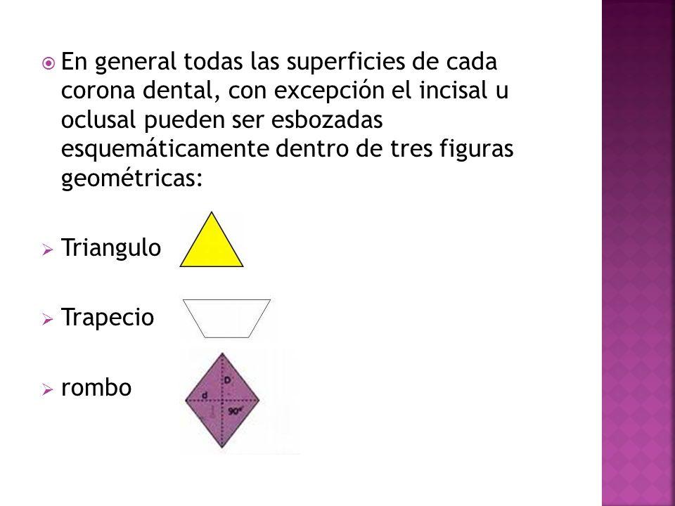 En general todas las superficies de cada corona dental, con excepción el incisal u oclusal pueden ser esbozadas esquemáticamente dentro de tres figura