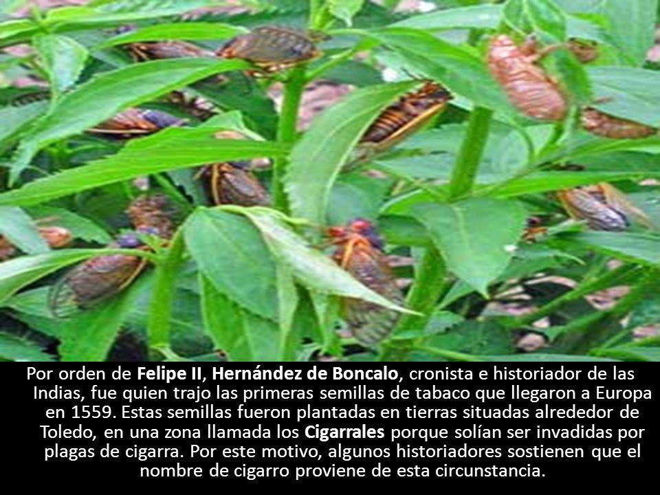 Por orden de Felipe II, Hernández de Boncalo, cronista e historiador de las Indias, fue quien trajo las primeras semillas de tabaco que llegaron a Eur