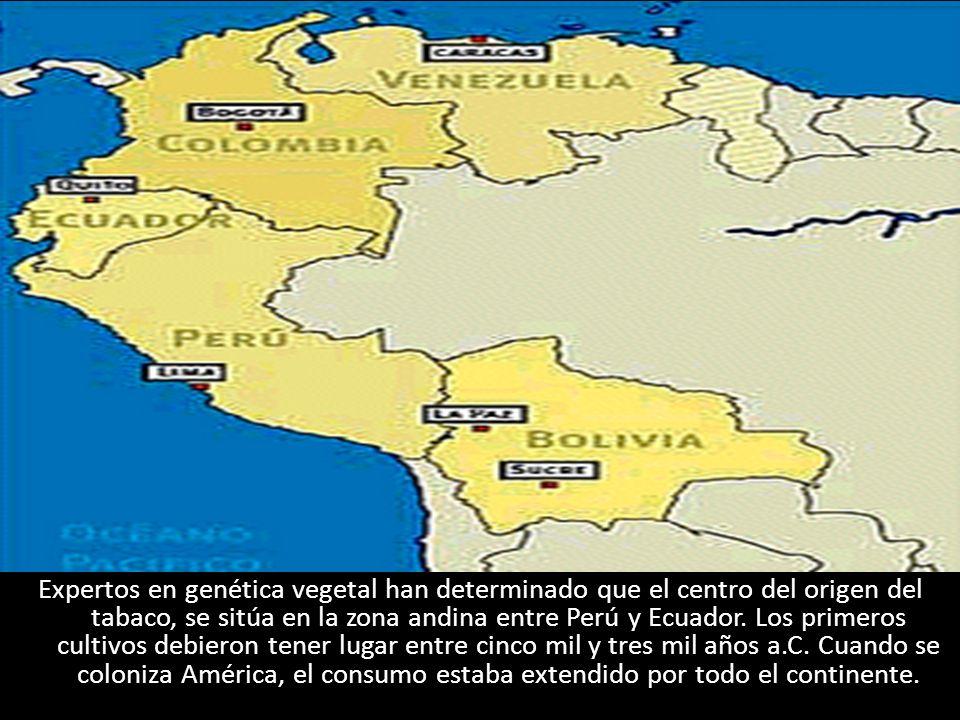 Expertos en genética vegetal han determinado que el centro del origen del tabaco, se sitúa en la zona andina entre Perú y Ecuador. Los primeros cultiv