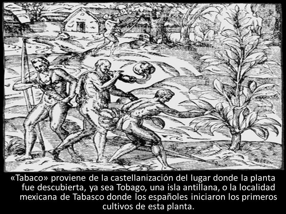 «Tabaco» proviene de la castellanización del lugar donde la planta fue descubierta, ya sea Tobago, una isla antillana, o la localidad mexicana de Taba