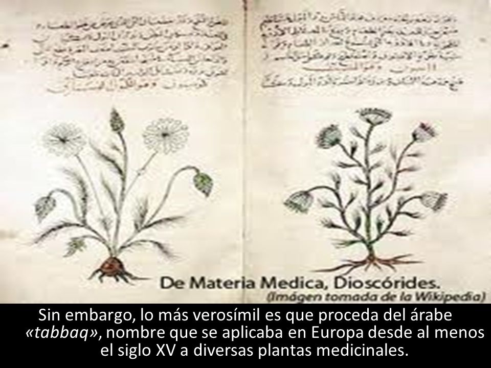 Sin embargo, lo más verosímil es que proceda del árabe «tabbaq», nombre que se aplicaba en Europa desde al menos el siglo XV a diversas plantas medici