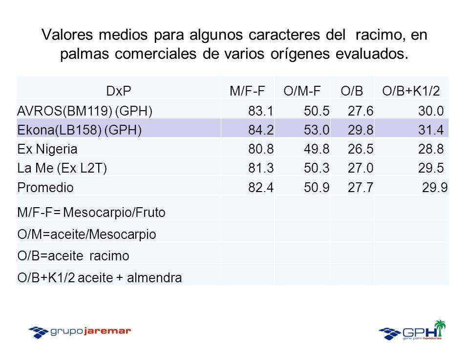 Valores medios para algunos caracteres del racimo, en palmas comerciales de varios orígenes evaluados.