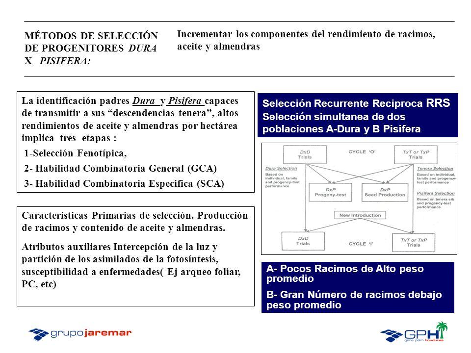 Esquema de cruces: La comparación del potencial de los progenitores se logra con el uso de métodos estadísticos que estiman los valores de GCA y SCA.