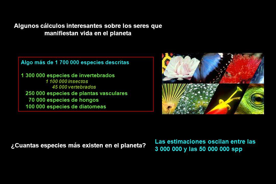 Algunos cálculos interesantes sobre los seres que manifiestan vida en el planeta Algo más de 1 700 000 especies descritas 1 300 000 especies de invertebrados 1 100 000 insectos 45 000 vertebrados 250 000 especies de plantas vasculares 70 000 especies de hongos 100 000 especies de diatomeas ¿Cuantas especies más existen en el planeta.