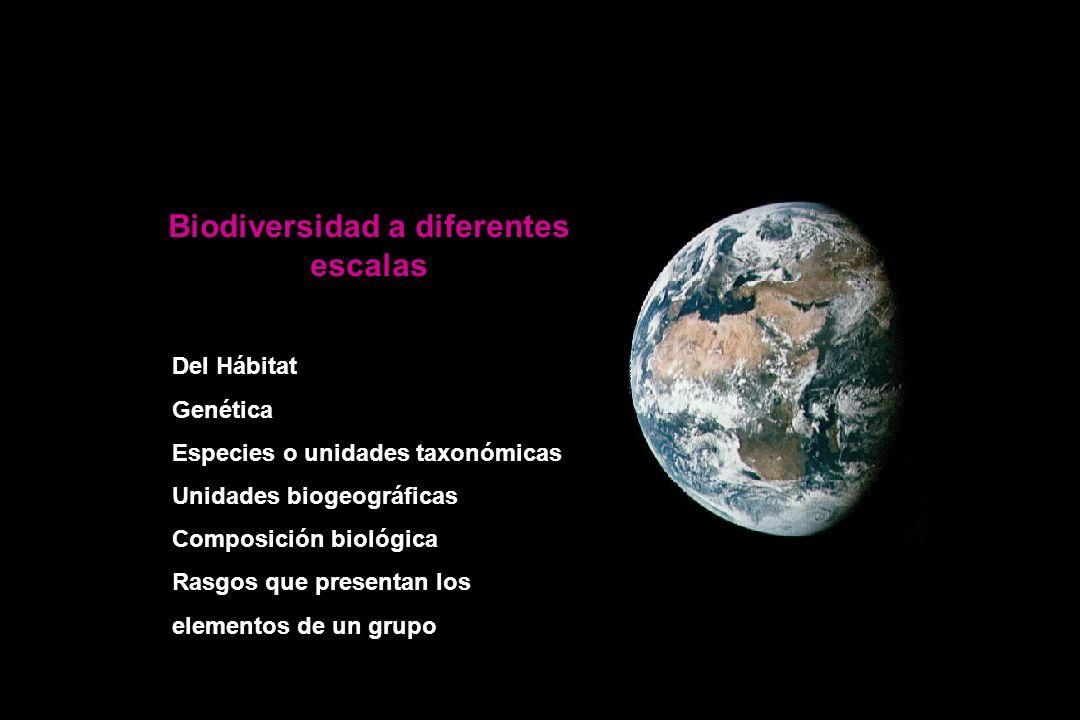 Biodiversidad a diferentes escalas Del Hábitat Genética Especies o unidades taxonómicas Unidades biogeográficas Composición biológica Rasgos que presentan los elementos de un grupo