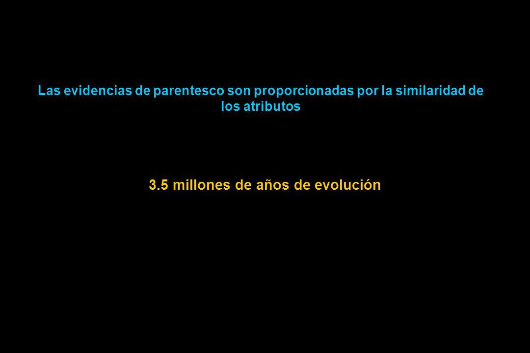 Las evidencias de parentesco son proporcionadas por la similaridad de los atributos 3.5 millones de años de evolución