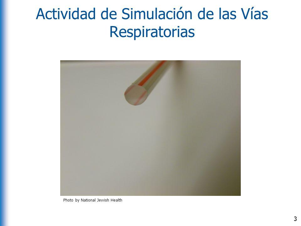 Actividad de Simulación de las Vías Respiratorias 3 Photo by National Jewish Health