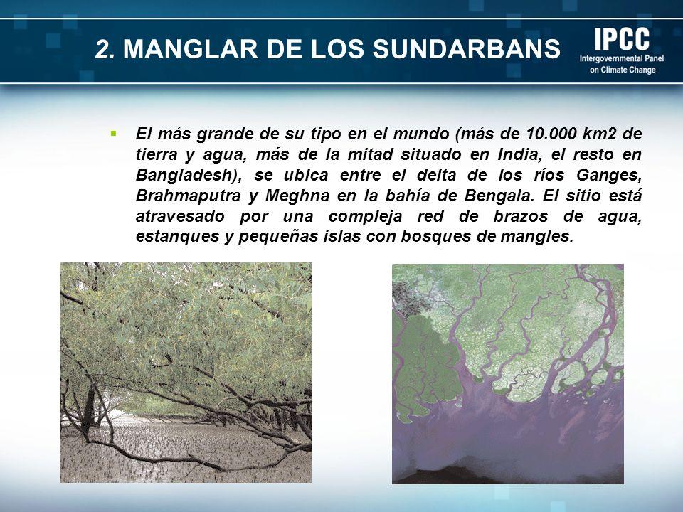 2. MANGLAR DE LOS SUNDARBANS El más grande de su tipo en el mundo (más de 10.000 km2 de tierra y agua, más de la mitad situado en India, el resto en B