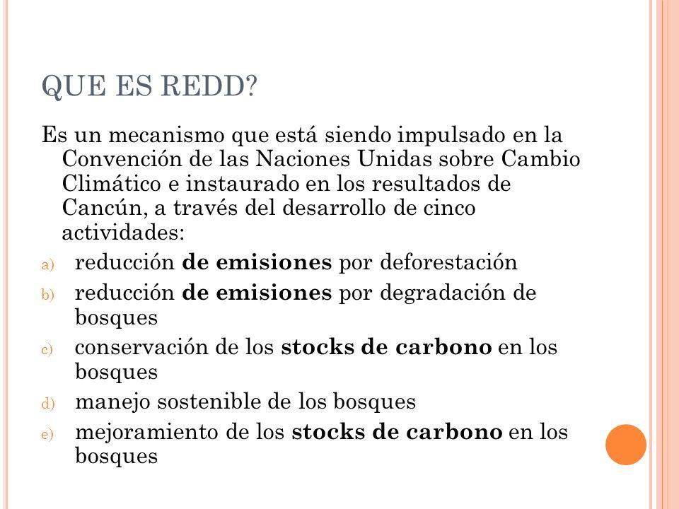 QUE ES REDD.