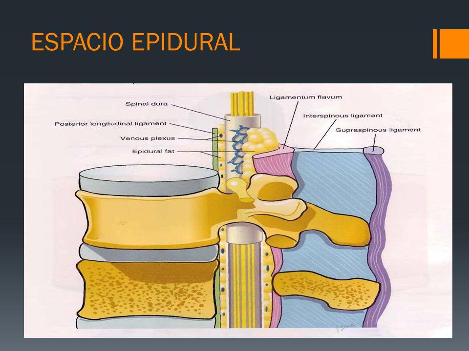 La grasa epidural ejerce de reservorio de fármacos lipofílicos La grasa protege a la médula en la flexo-extensión de la columna ESPACIO EPIDURAL